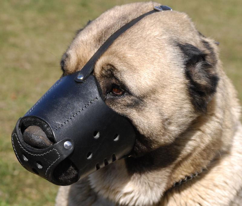 dog door training instructions